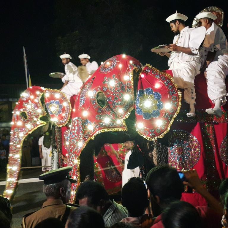 elephant_parade_instragram_@pratserie