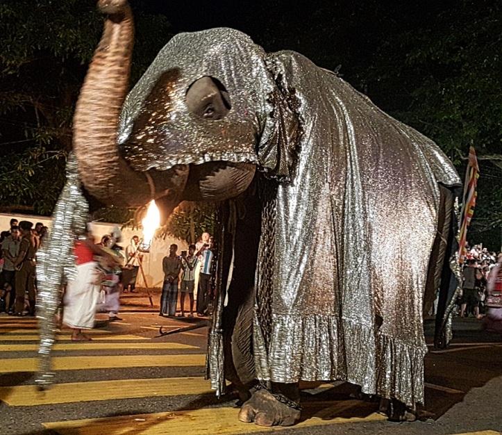 elephant_parede_by_Fernanda_Prats.jpg