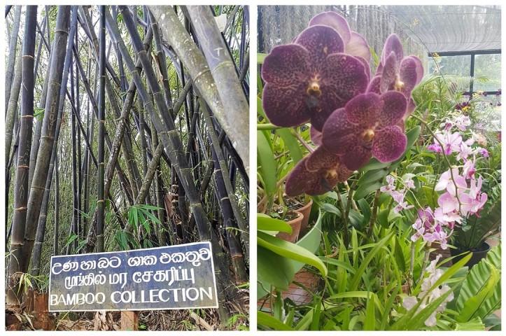 sri_lanka_botanic_garden_by_Fernanda_Prats