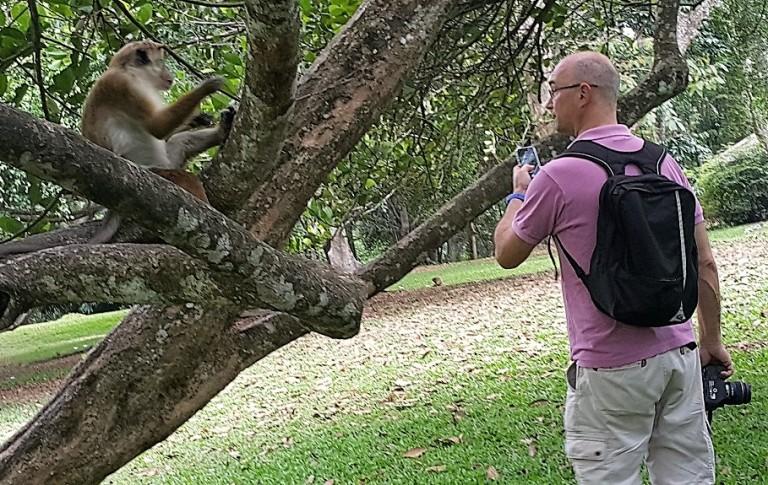 Sri_Lanka_monkey_pratserie