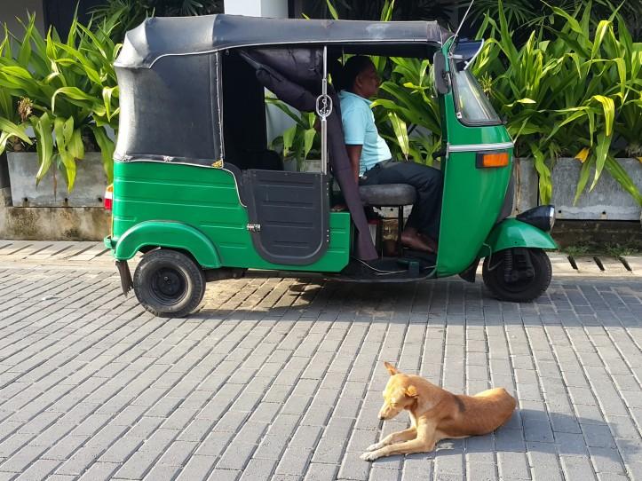 tuktuk-sri-lanka-pratserie-blog-1