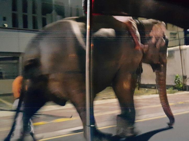 Elefante na rua - Sri Lanka