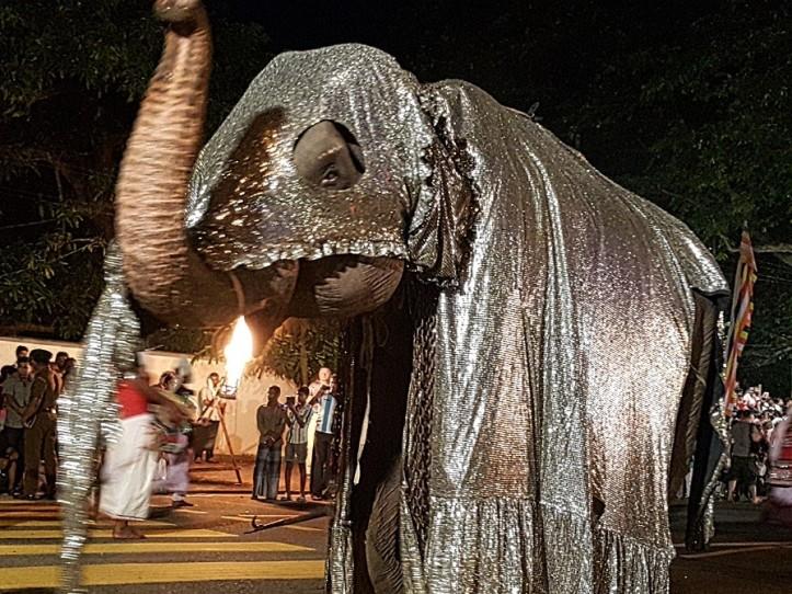 elephant parade Sri Lanka @pratserie