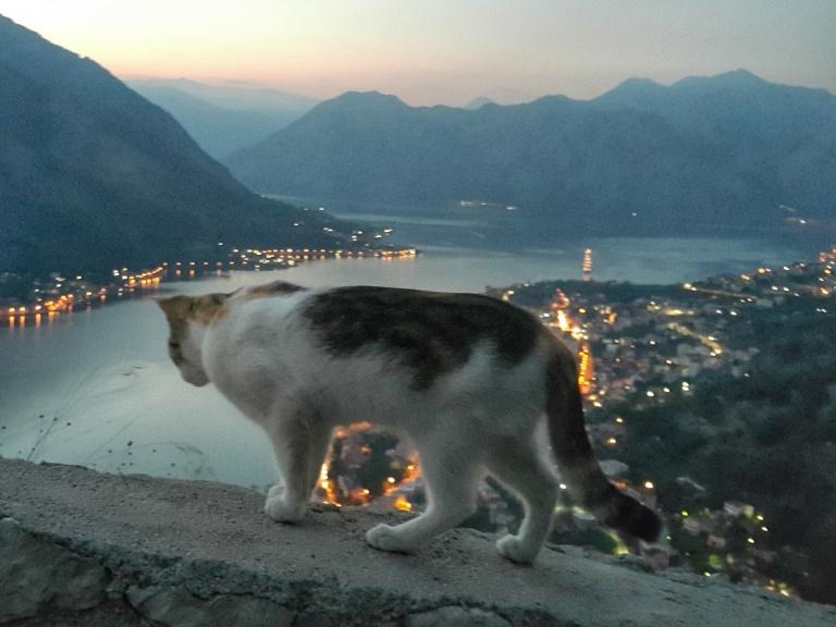 Gatinho e vista aérea de Kotor, Montenegro @pratserie