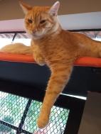 cat-cafe-@pratserie (11)