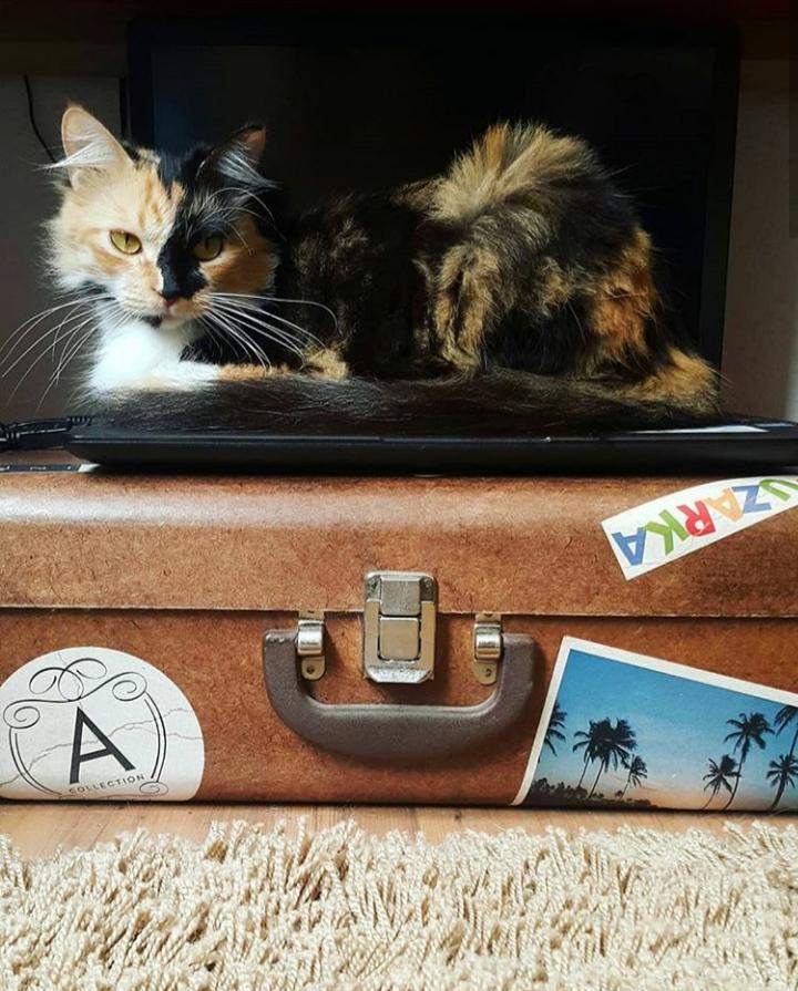 cat-cafe-@pratserie (2)