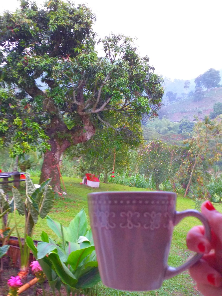coffee at Hacienda Venecia, Colombia @pratserie