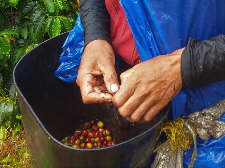 rota-dos-cafes-colombianos-@pratserie (33)